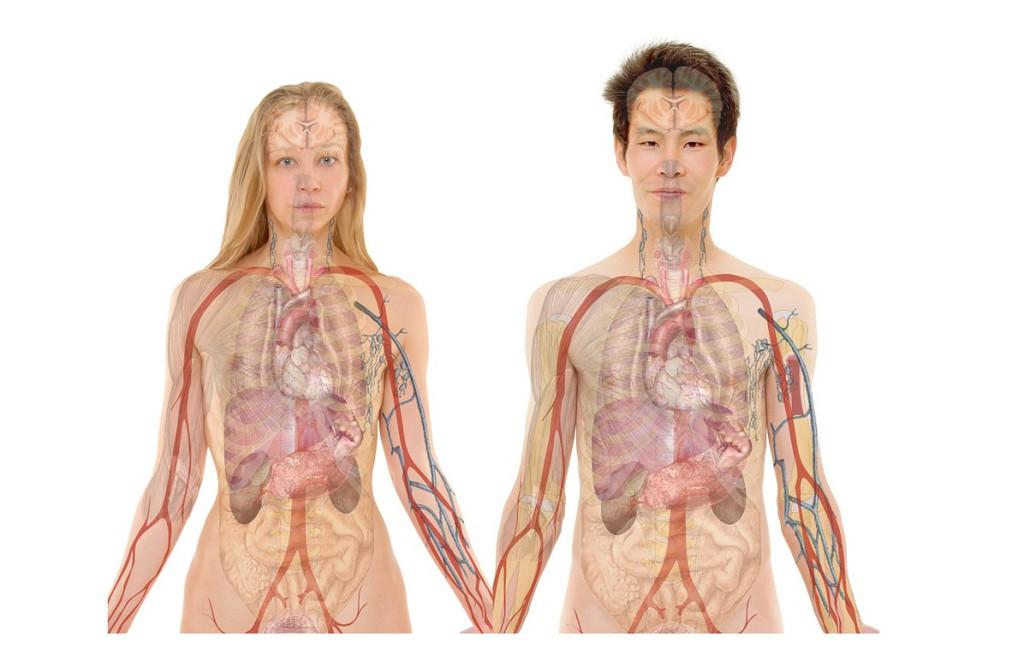 Theta Healing, Theta Healing intuitív anatómia